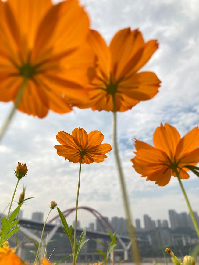 花朵的照片。