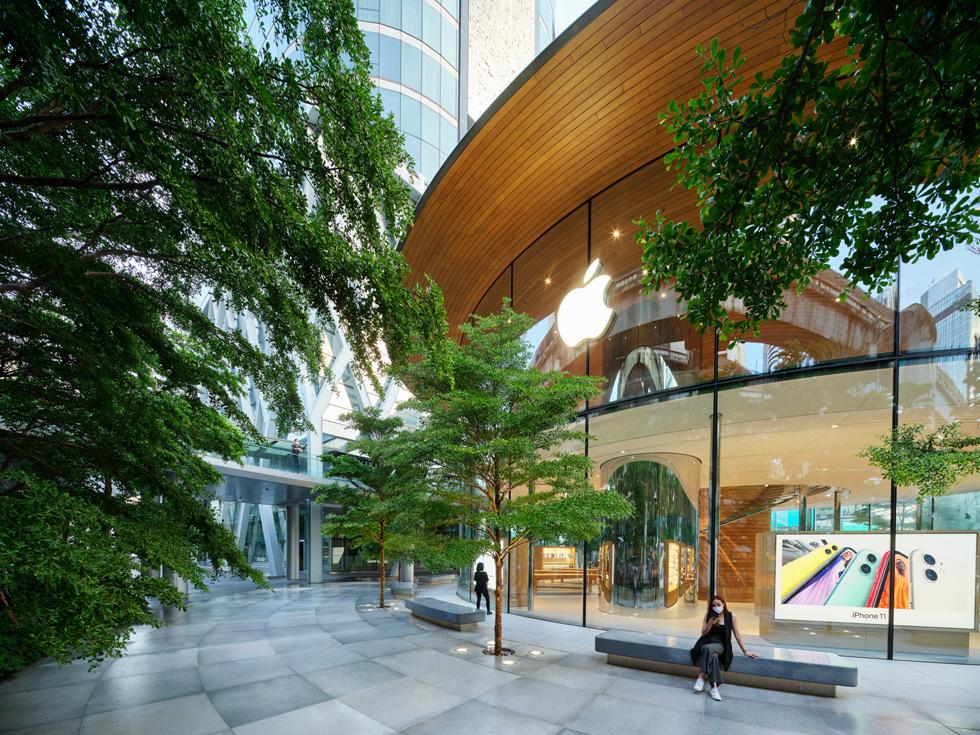 Apple Central World 户外广场的榄仁树。
