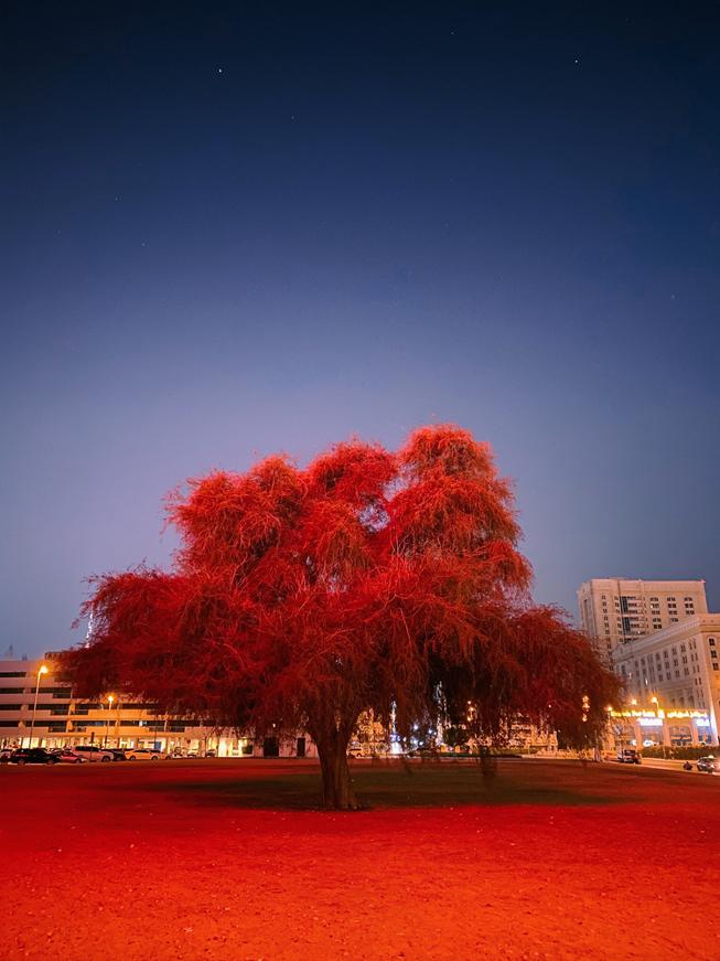 繁星闪烁的天空下有着红叶子的树。