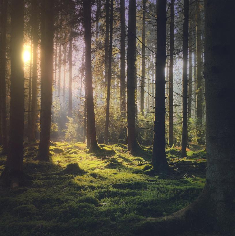 阳光穿过树林的图片。