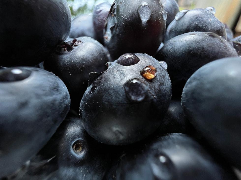 使用 iPhone 13 Pro 超广角镜头以微距模式拍摄的蓝莓。