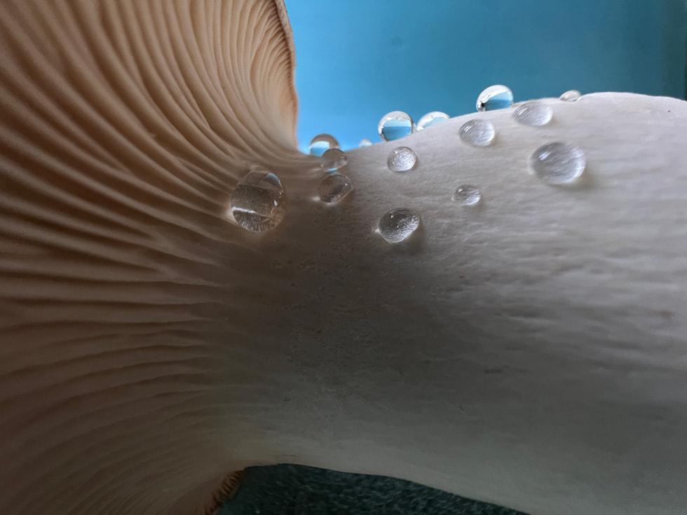 使用 iPhone 13 Pro 超广角镜头以微距模式拍摄的蘑菇。