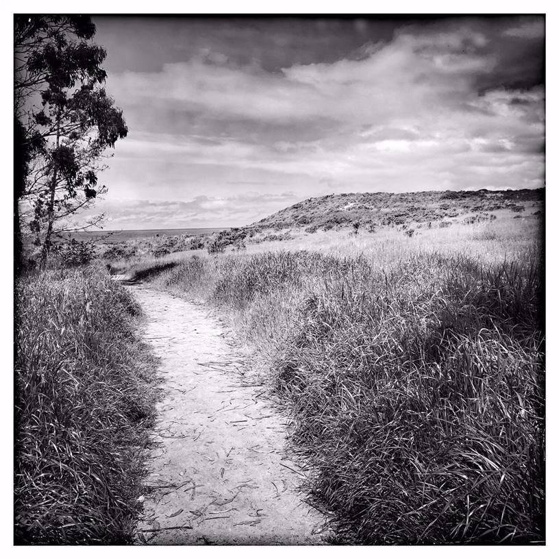 Rachael Short 用 iPhone XS 拍摄的 Monastery Beach 海边小路。