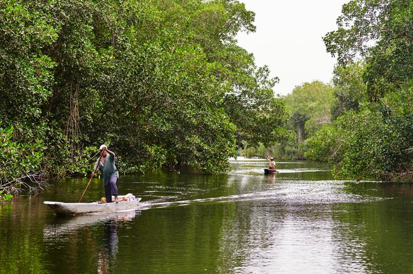 Cispatá 海湾的当地渔民在出入红树林的水渠中行驶。