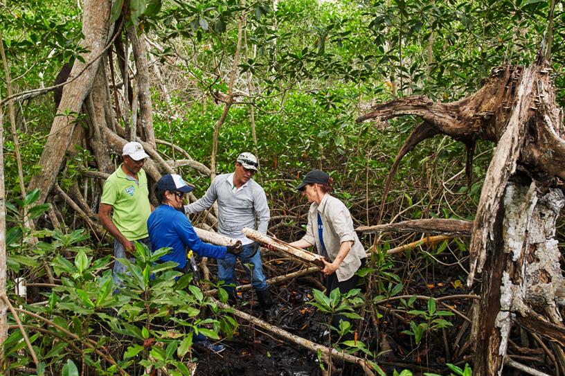 保护国际基金会的 María Claudia Díazgranados Cadelo 和团队成员检测土壤样本。