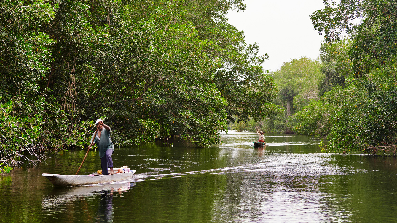 两人驾船穿梭于哥伦比亚红树森林中。