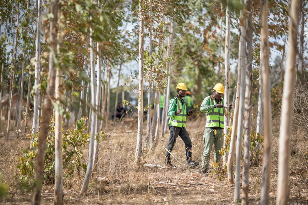 肯尼亚某森林中的两位工人。